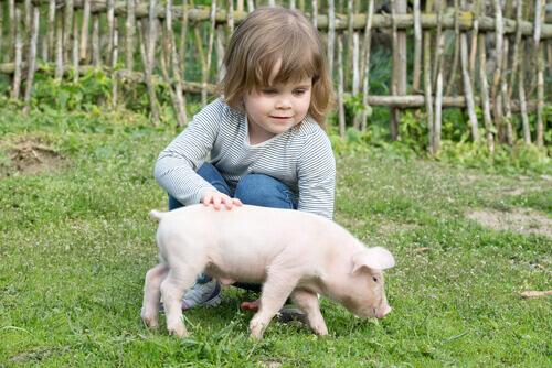 Porcos como animais de estimação