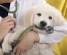 veterinario-cão