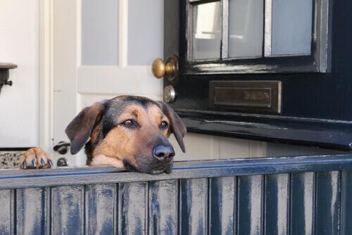 Dicas para evitar que seu cão aranhe as portas