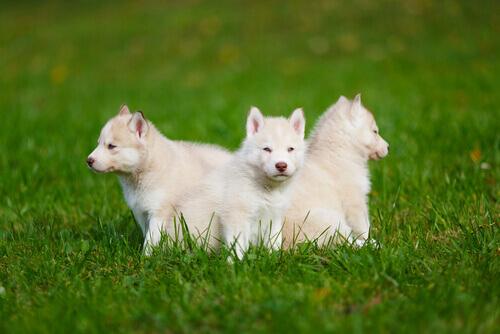 Alimentação especial para cães durante o primeiro ano de vida