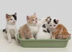 Gatos em caixa de areia