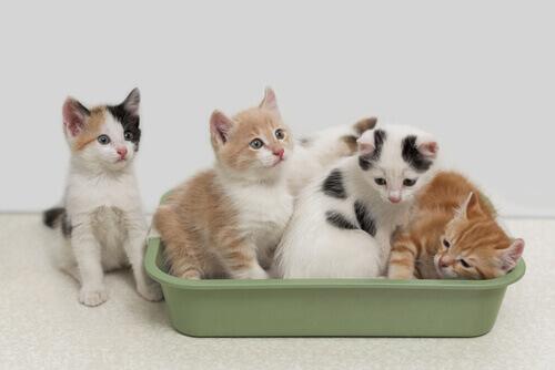 Conheça as vantagens da areia biodegradável para gatos