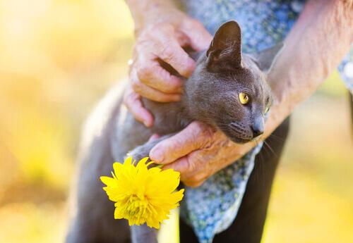 Carinho em gato