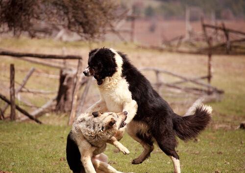 A agressividade em cães
