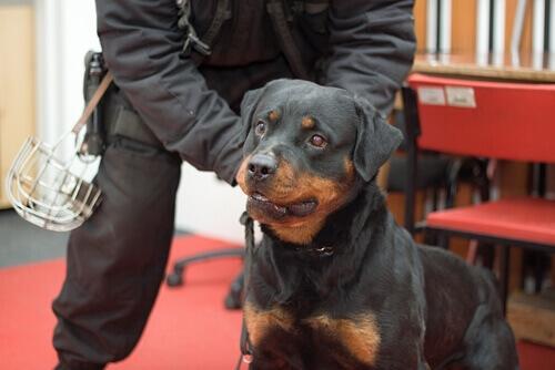 Treinamento dos cães anti-pirómanos