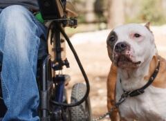 cães-de-terapia