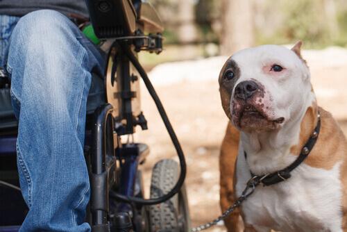 Como é a vida dos cães de terapia