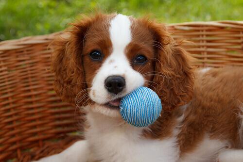 Primeiros socorros: meu cão engasgou!