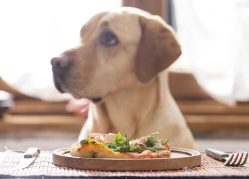 Cão com comida
