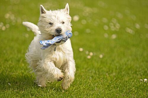 Reforço positivo: eduque o seu cão e faça-o mais feliz