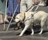 cão-de-assistencia