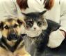 cão-gato-veterinario-4