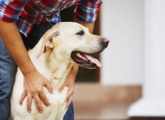 Cão sendo abraçado