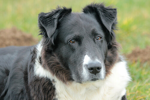 A dermatite ou irritação da pele dos cães