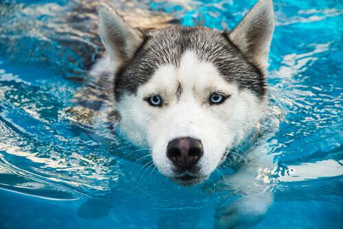 Como agir em caso de afogamento dos nossos animais de estimação