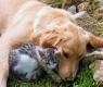 Raças de cães que se dão bem com gatos