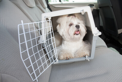 Caixa de transporte para animais: Conheça todas aqui!