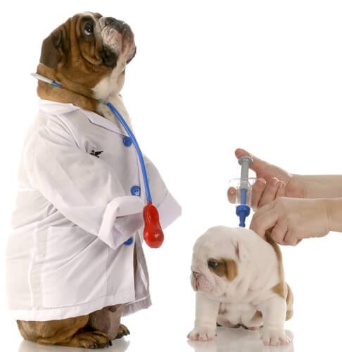 Cão vestido de veterinário