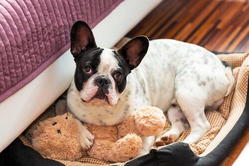Cão em sua cama
