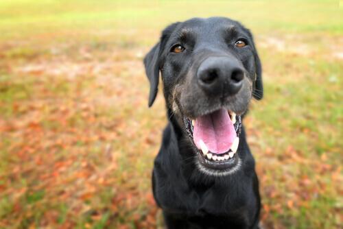 Cachorro de boca aberta
