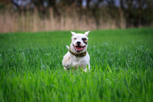 Responsabilidade com cães potencialmente perigosos