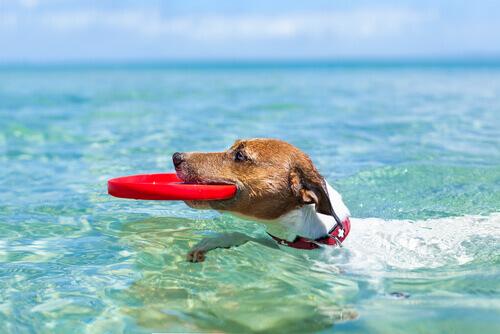 Como viajar nas férias de verão com o cachorro? Aqui você saberá
