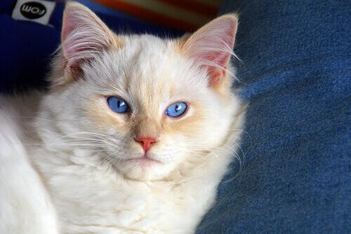 Gatos medrosos. Como podemos ajudá-los a perder o medo?