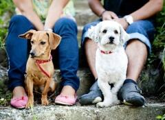 Não obrigue seu cão a interagir com os outros