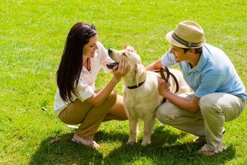Cachorro e seus donos