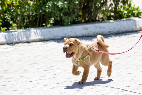 Cão com coleira