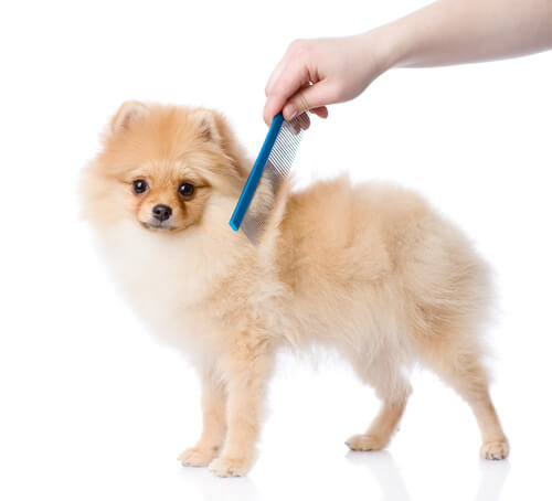 Pentear os pelos dos cães