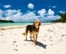 praia-dos cães