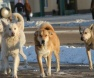 Animais na rua