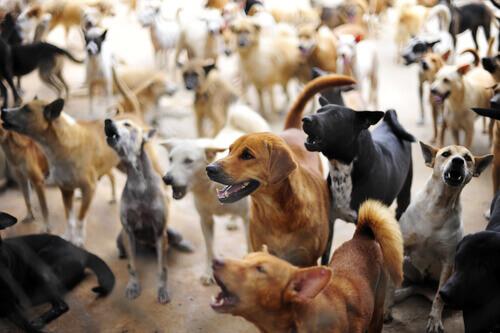 Síndrome de Noé: acumuladores de animais