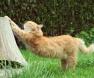 sindrome-urologica-felina