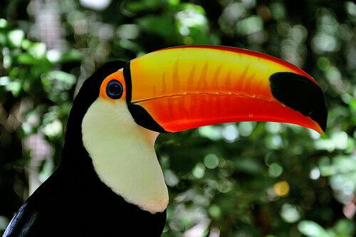 O que nos dizem os bicos das aves?