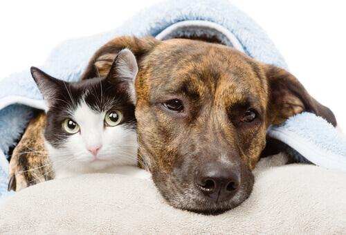 O tumor de mama em cães e gatos, uma doença muito perigosa