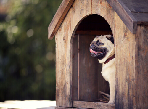 Utensílios e produtos caninos: apresentamos a você os imprescindíveis