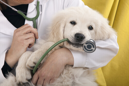 Cuidado com a saúde dos cães
