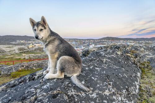 A história de Laika, a primeira cadela astronauta