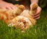 acalmar-gatos-nervosos