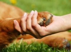 Como ajudar os animais