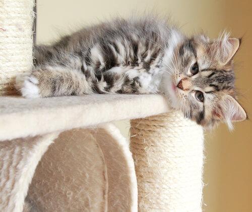 Gato deitado em arranhador
