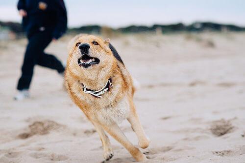 Os cães confiam demais nos humanos