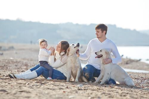 Cães e família