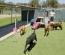 cães-e-gatos-resgatados