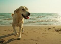 O trabalho dos cães socorristas