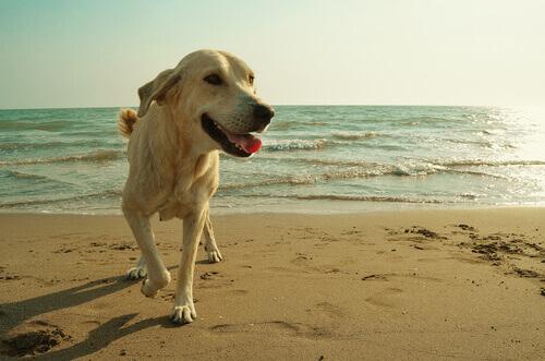 Treinamento dos cães socorristas