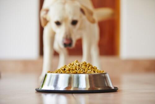 Cão comendo
