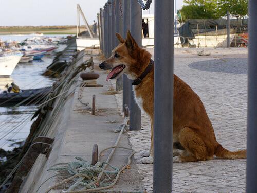 Um cão fiel
